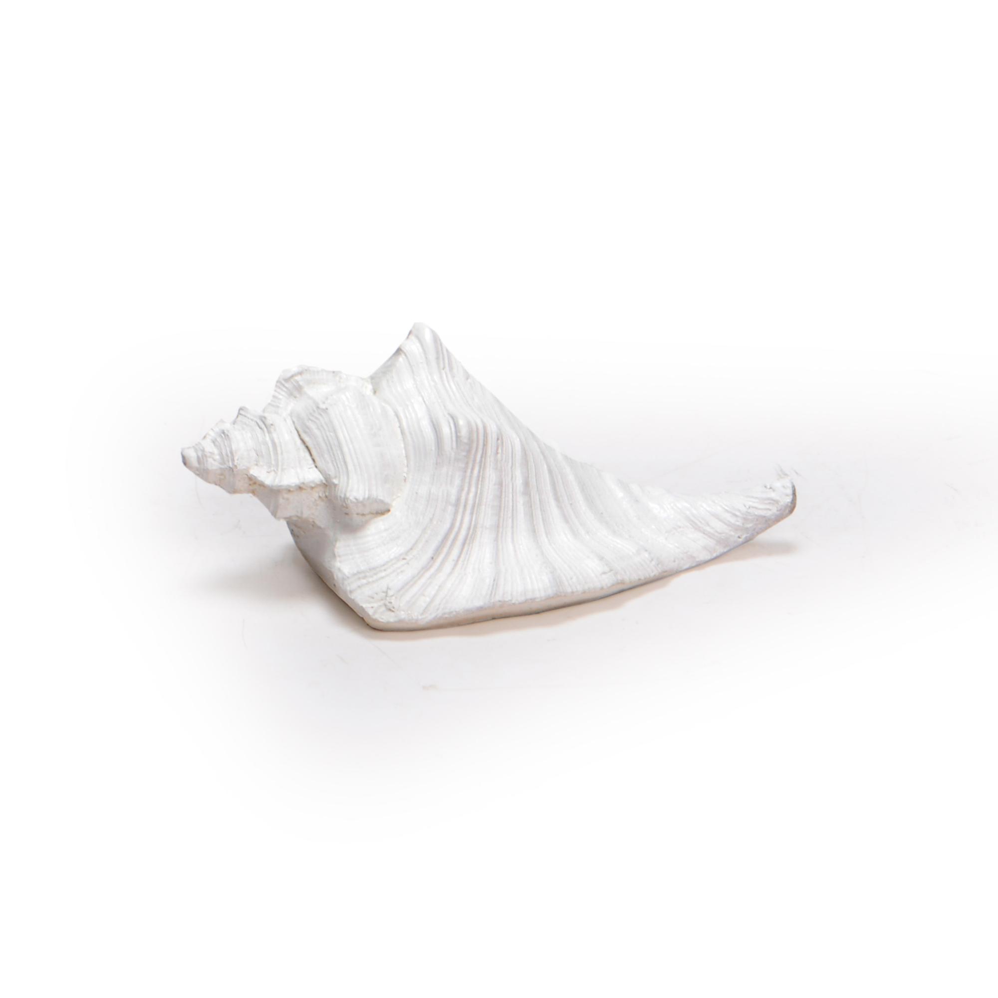 Concha de resina Branca